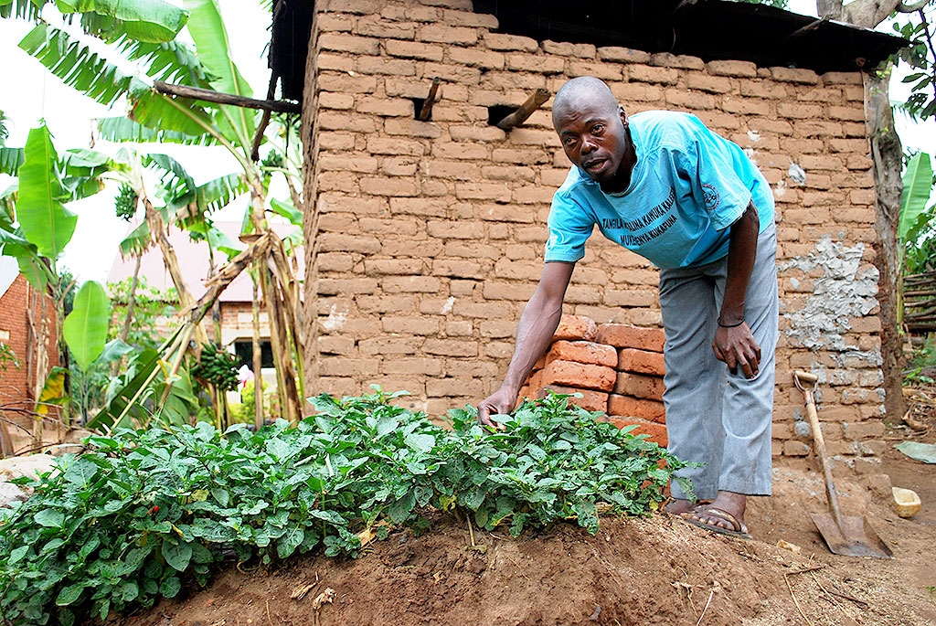Ssempijja's vegatbale garden at the backyard where he gets vegetables to boost his immuniity. KITOVU MOBILE PHOTOS.
