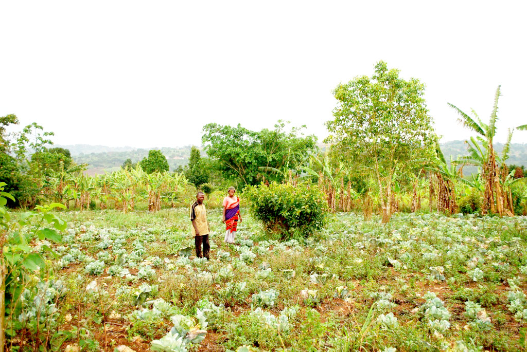 The couple in a cabbage garden.Growing such crops has seen the two get more income than before,thanks to Gorta training.