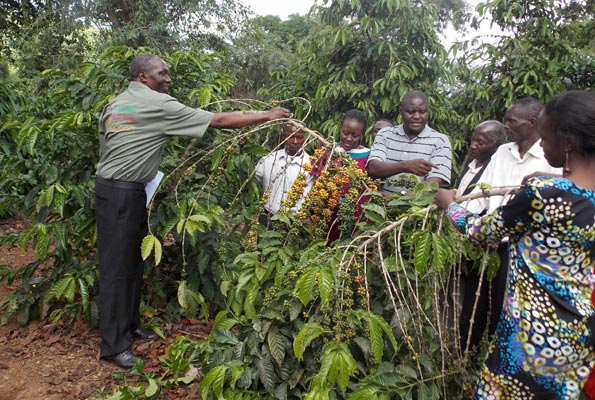 Coffee farmers at an on-farm training. Many coffee farmers in Uganda, especially the young ones, face similar challenges. PHOTO BY MICHAEL J SSALI